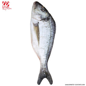 PESCE - 55 cm